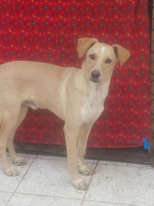 Cachorro Macho 6 Messs en Adopción