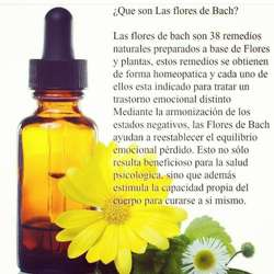 Terapeuta Floral- Flores de Bach