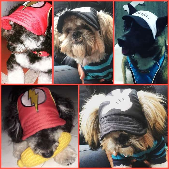 Gorras para Mascotas