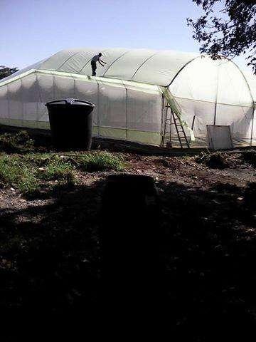 Vendo invernaderos en arco galvanizado de 7 metros de ancho x 70 metros de largo.