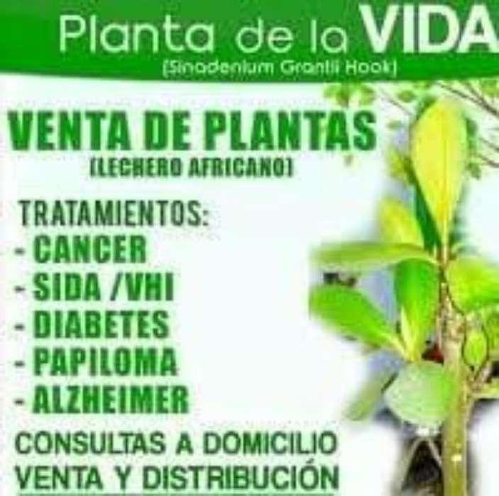 Planta de La Vida