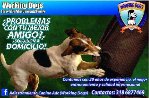 <strong>adiestramiento</strong> canino o paseos a domicilio en bogota