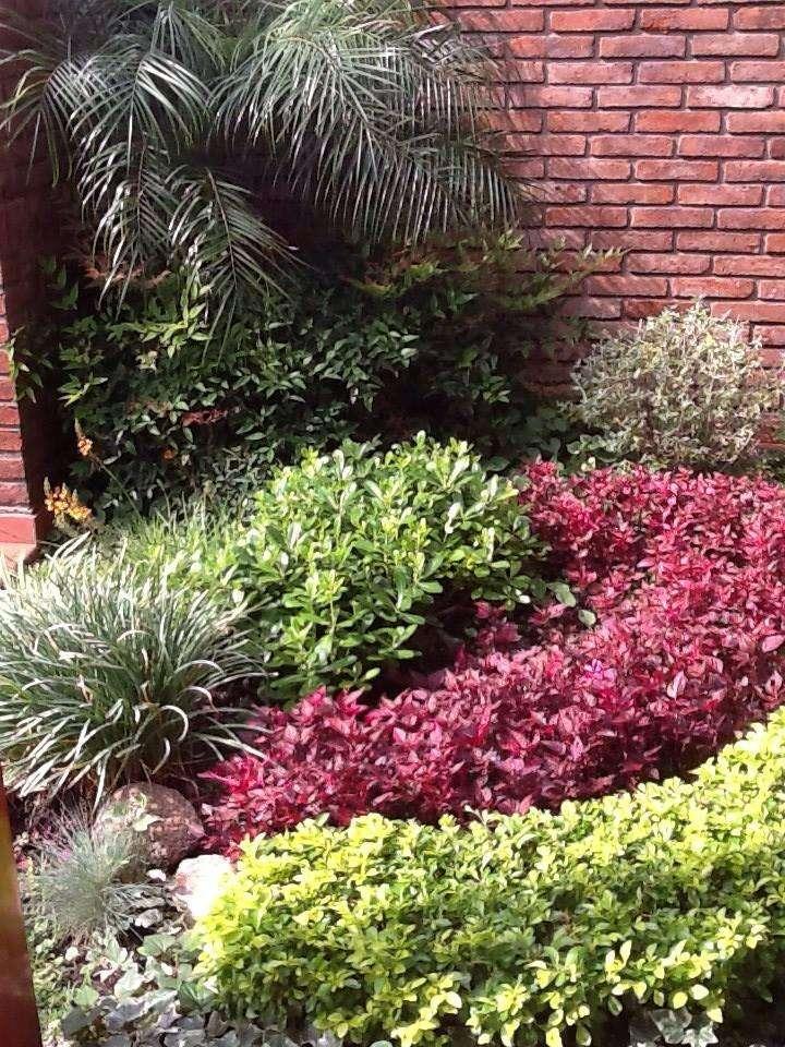 jardinero con experiencia, plantacion y corte de pasto y arbustos