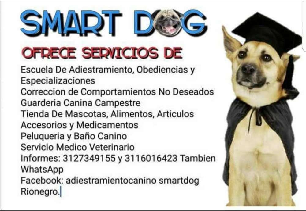Guarderia Y Adiestramiento Canino.
