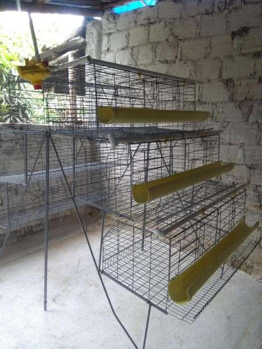jaula para gallina ponedora