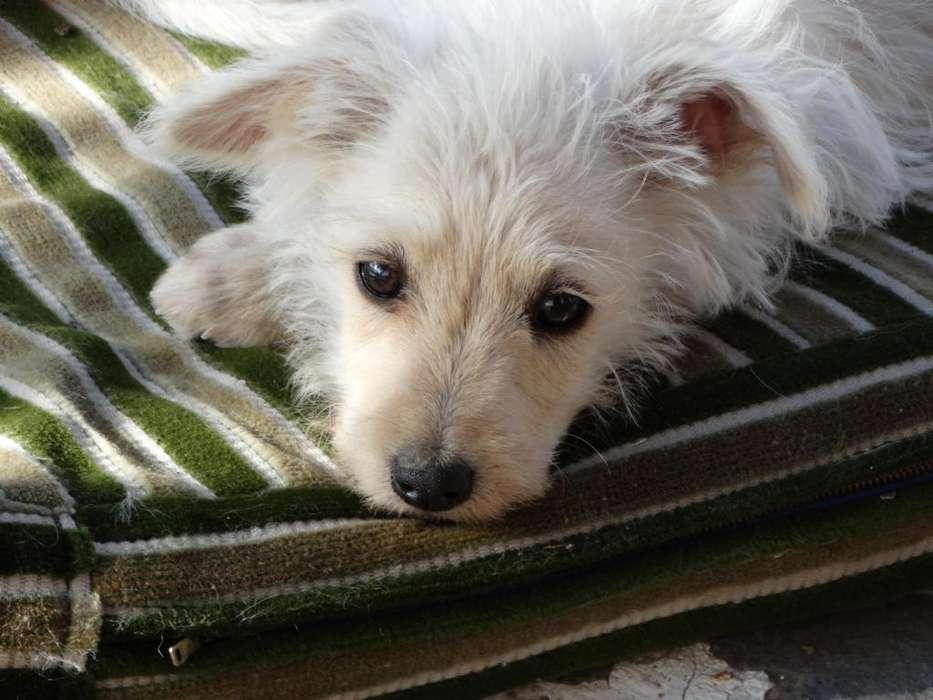 Cachorros en Adopción Responsable
