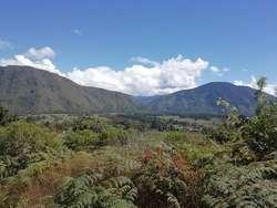 Terrenos rurales ubicados en el sector Llamaquizú Valle de Oxapampa, a 5 minutos del centro de la ciudad