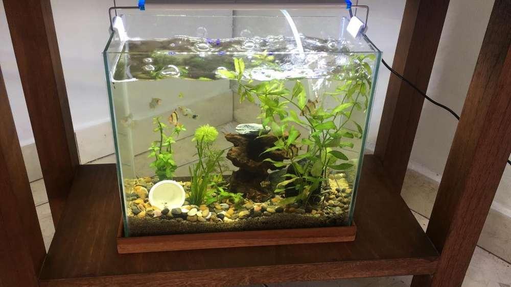 Venta de peces y accesorio para mascotas