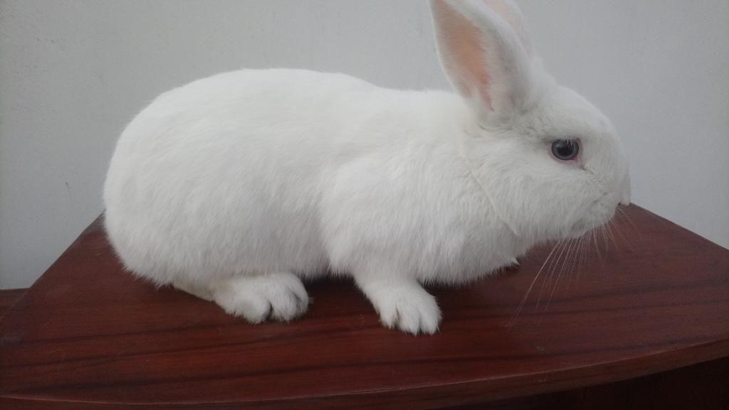 Conejos de Casa