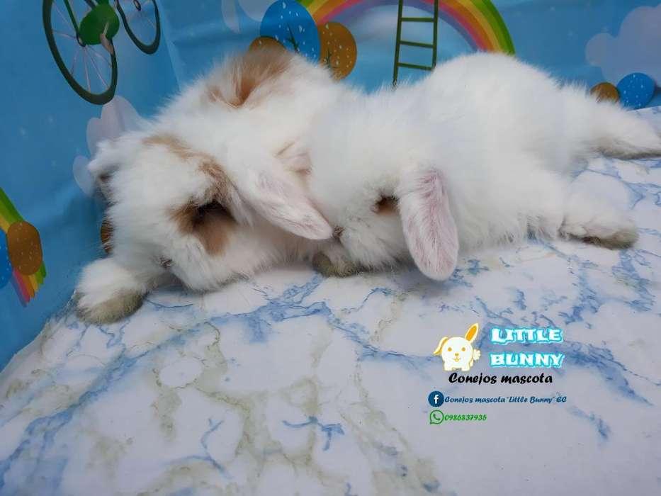 Conejos Conejitos Teddylop