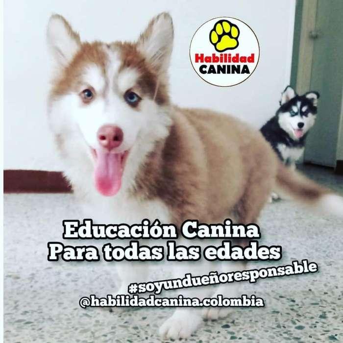 Educación Y <strong>adiestramiento</strong> Canino Profes