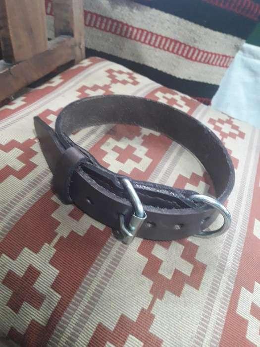 Collar para <strong>perro</strong>s Muy Resistente