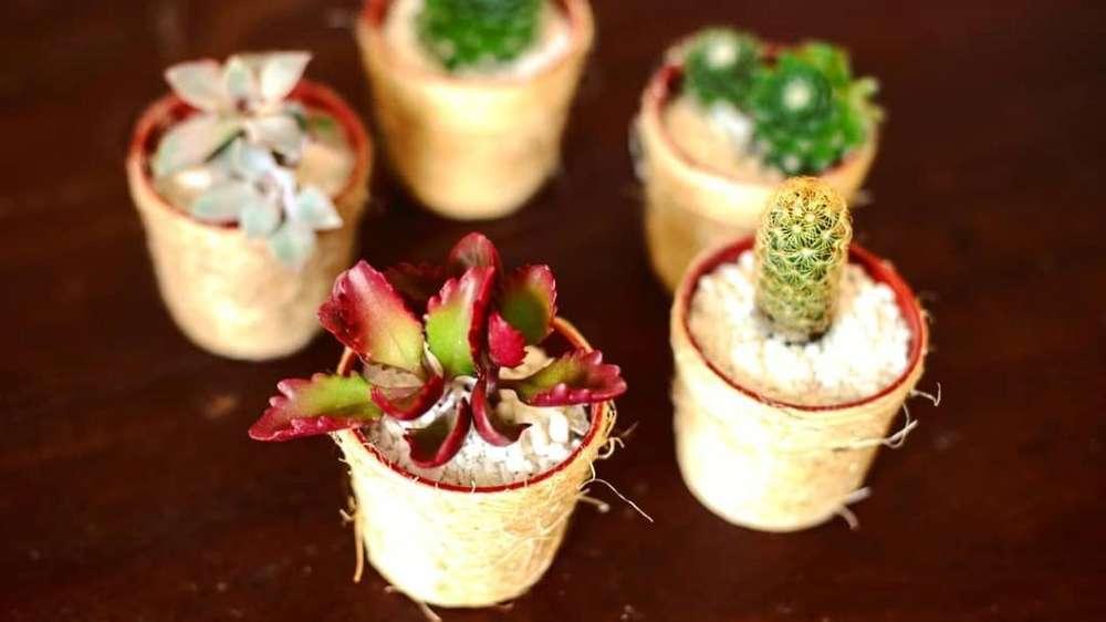Cactus Y Suculentas.souvenirs, Regalos