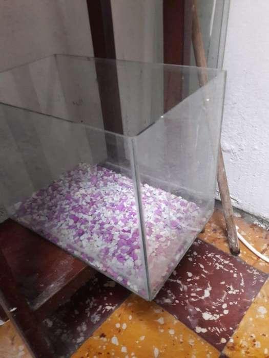 Vendo Pecera (sin Piedras)