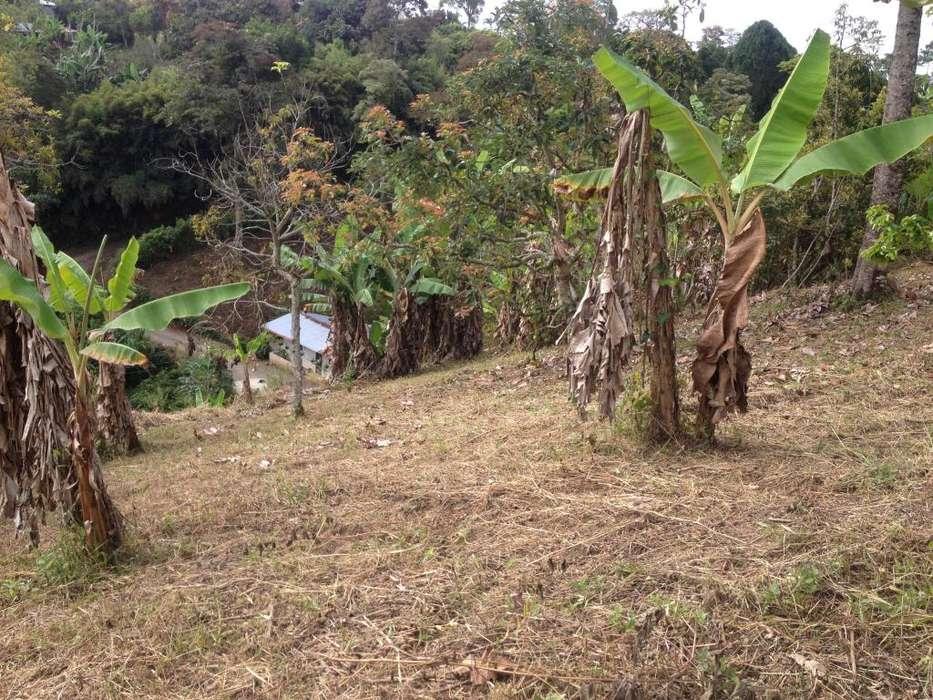 Venta Lotes 6.300 metros quadros Betulia Alta ( Pereira )