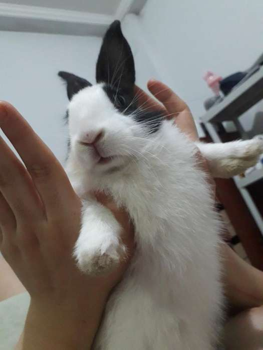 Se Vende Conejo Macho