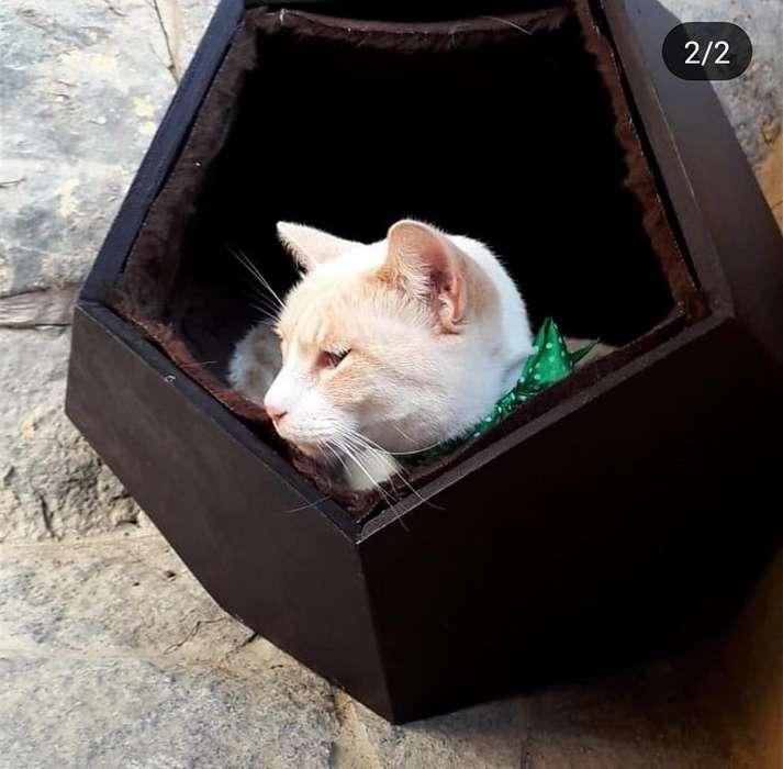 Cama para Gato Perro Chihuahua