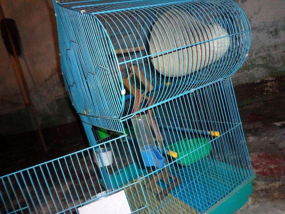 <strong>jaula</strong> para Pájaros
