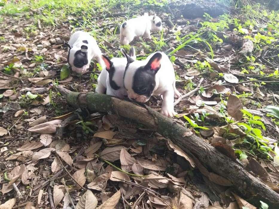 <strong>perros</strong> Baratos 3052477228