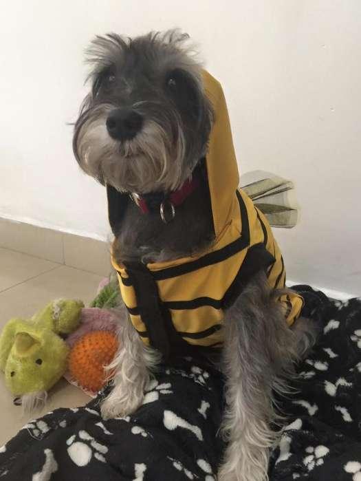 Disfraz <strong>perro</strong> Abeja