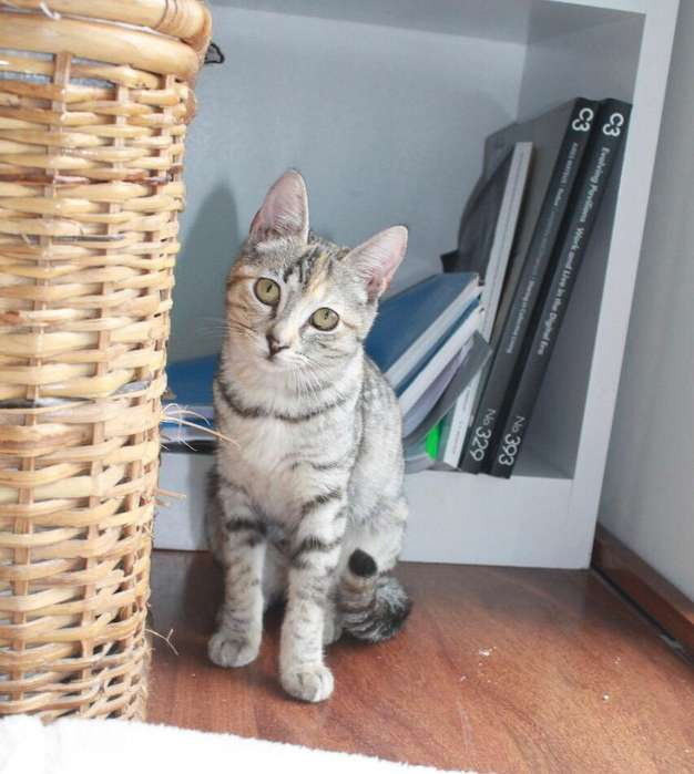 Lulu Gatita en Adopcion
