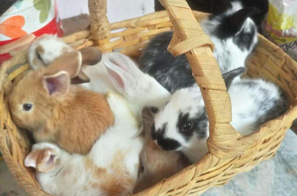 Venta de conejos (Envigado)