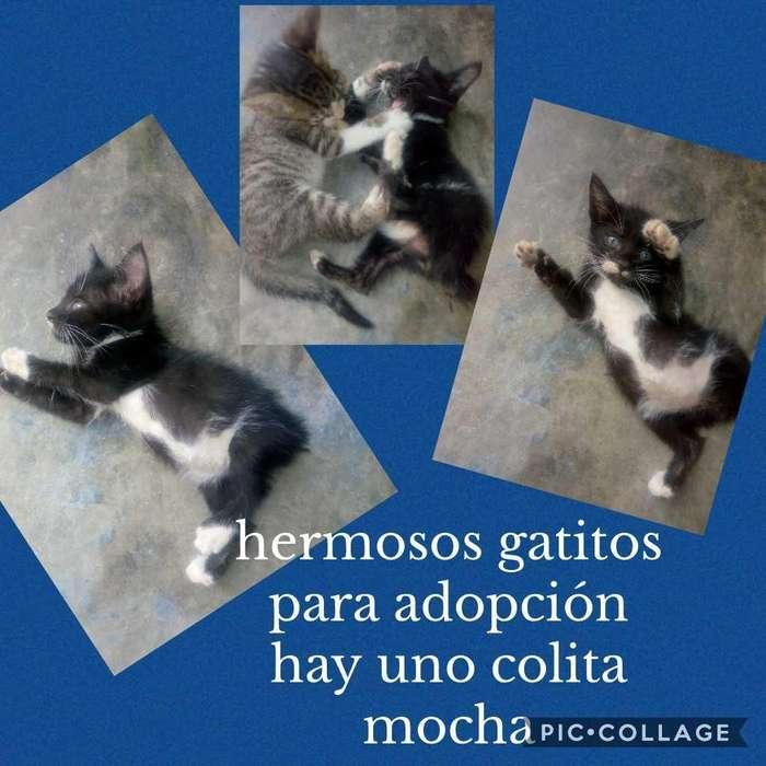 Gaticos en Adopción