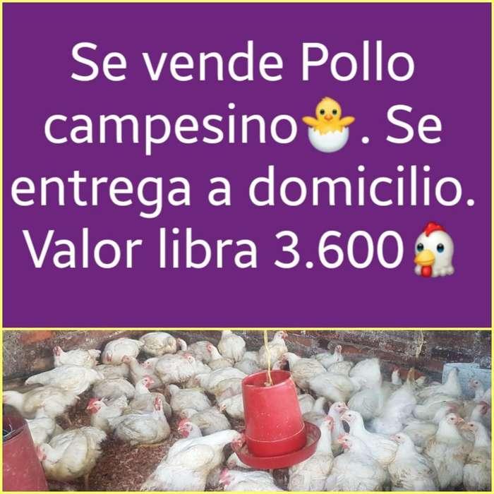 Venta de <strong>pollos</strong> Csmpesinos