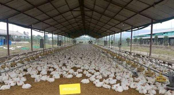 Se vende o alquila <strong>granja</strong> avicola automatizada