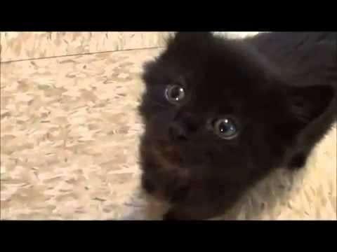 Doy en adopción gatos.