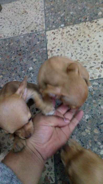Venta Chihuahua