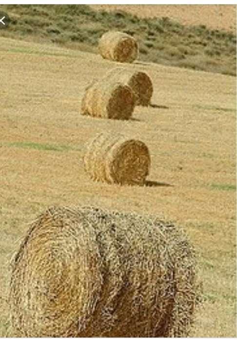 Pastura Heno 5kg 350