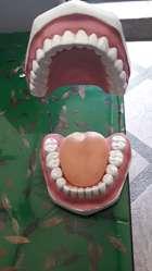 Modelo Dental