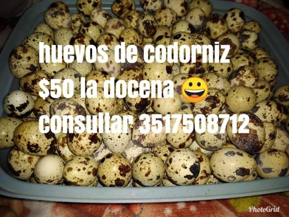 Huevos de codorniz para consumo