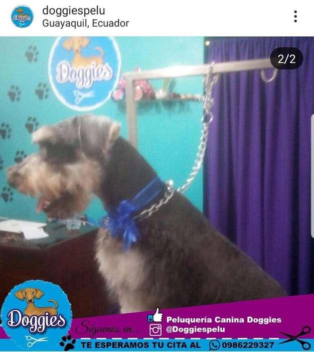 Peluqueria Canina Servicio a Domicilio