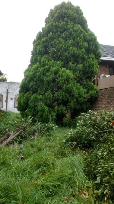 Jardineria Y Poda