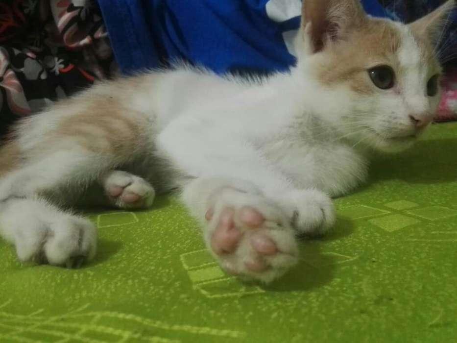 Lindos Y Sanos Gaticos en Adopcion