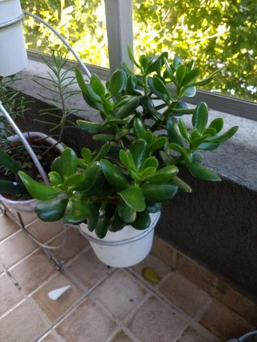 Plantas Listas para Transplantar
