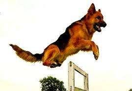 curso de adiestrador canino en la plata con entrega de certificado