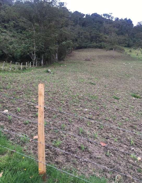 Lote 1 Fanegada Pasca Cund Cultivar 6400