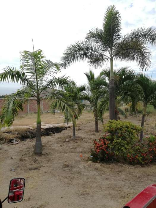 Terreno Urbanizable y hornamentado ZarumillaTumbes