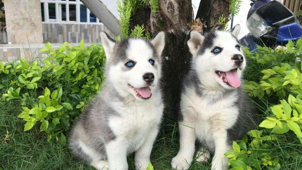 Divinos Cachorritos Lovos