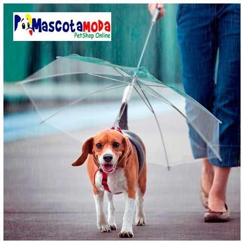 Paraguas sombrilla para perros traílla perfecta para lluvias