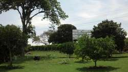LOTE EN PEREIRA - CAFELIA - wasi_159226