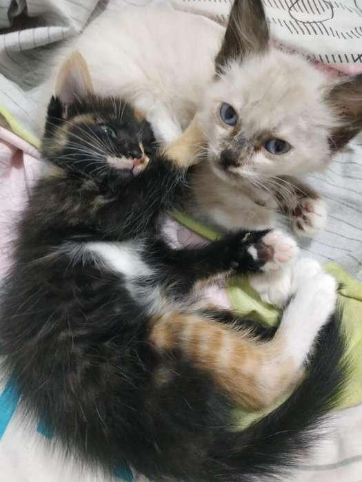 <strong>gatitos</strong> en Adopción