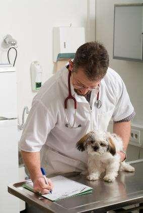BUSCO MEDICO <strong>veterinario</strong>