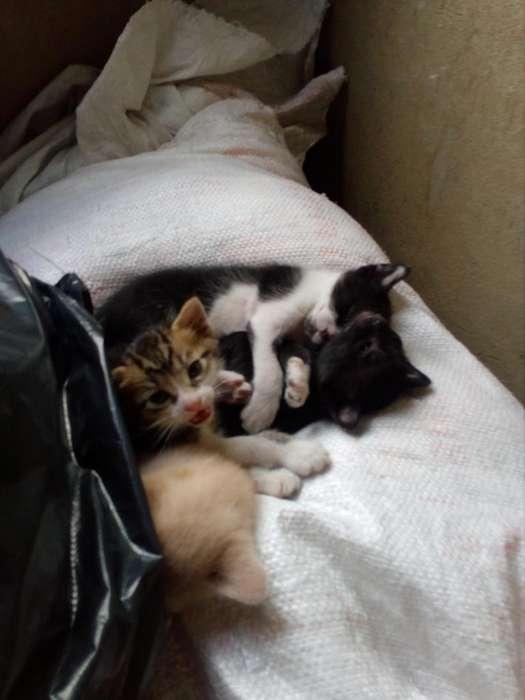Gaticos recien nacidos