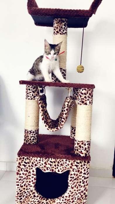 gimnasio para gatos obsequio