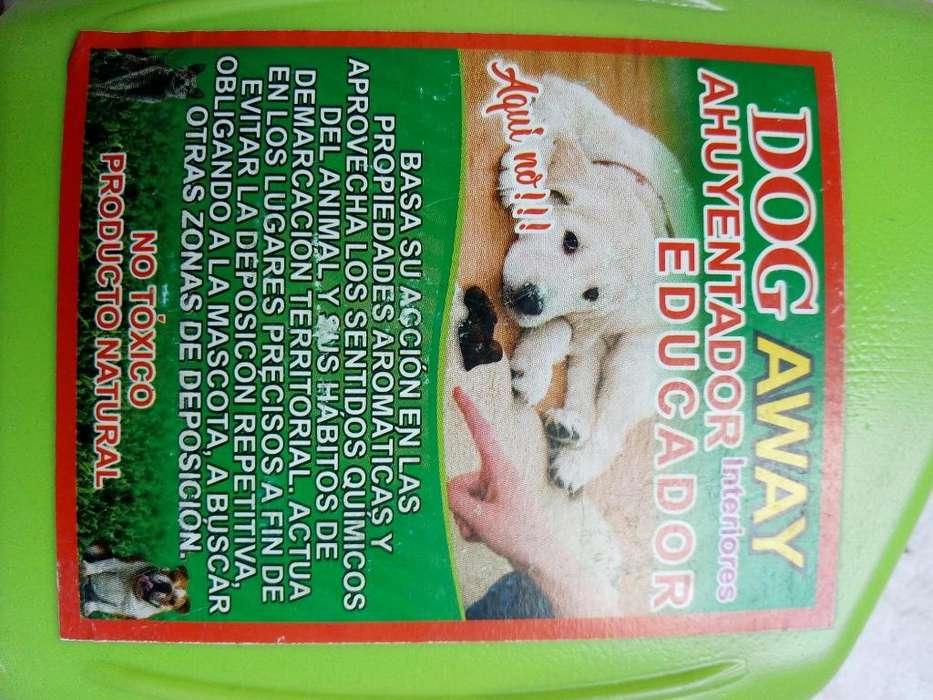 Educador de <strong>perro</strong>s Y Gatos