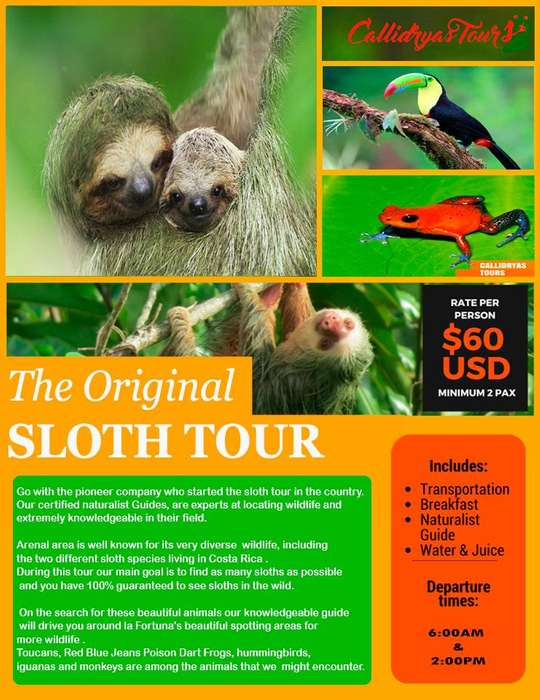 Sloth Tour by Callidryas Tours